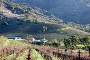Shafer Vineyards