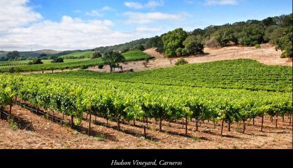 Hudson Vineyard