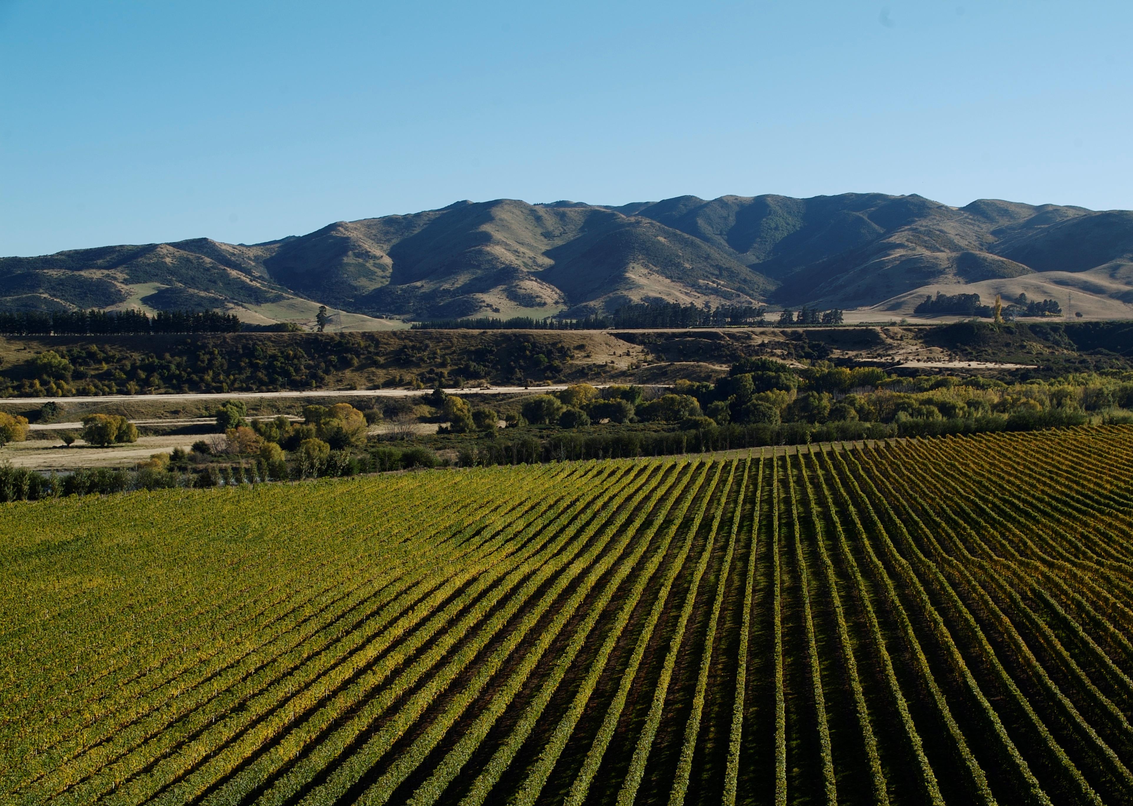 Villa Maria Winery New Zealand